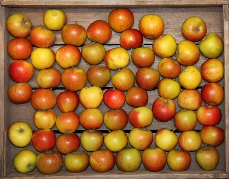 A Wooden Box Holding Some Freshly Picked Apples. photo