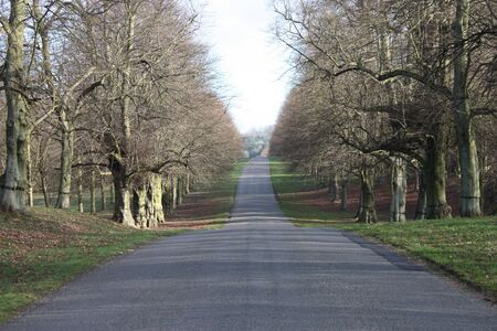 A Country Lane Through a Double Lime Tree Avenue  Stock Photo - 13620710