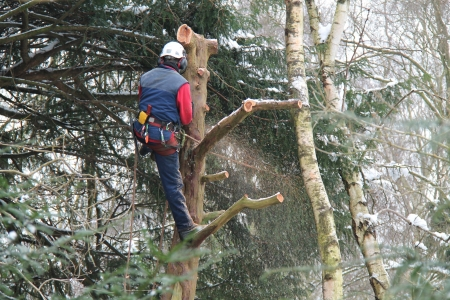 A Lumberjack Removing Branches on a Snowy Day.