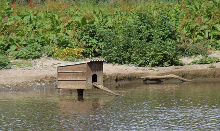ramp: A Wooden Duck House with a Ramp in a Pond. Stock Photo