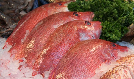 A Retail Display of Four Red Senegal Snapper Fish.