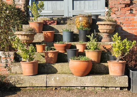 An Arrangement of Garden Potted Plants on Stone Steps.