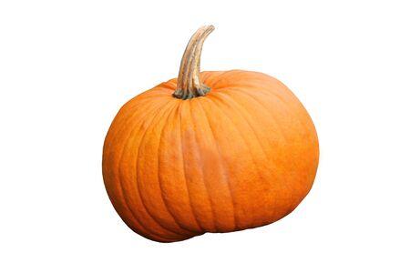 An Isolated Large Bright Orange Pumpkin Fruit.
