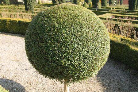 A Pom Pom Sphere Tightly Cut Topiary Ball.