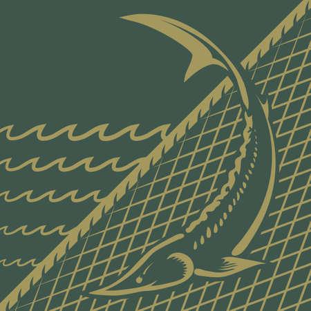 redes de pesca: Especies de esturión de caza furtiva en peligro prohibido ilustración vectorial Vectores