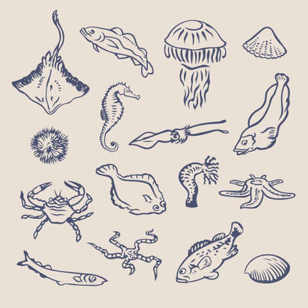 hydra: Hand drawn vector set of various ocean inhabitants. Fishes, crab, stingray, shellfish, squid, echinus, jellyfish, sea horse, hydra,starfish graphic symbols. Underwater life marine creatures collection