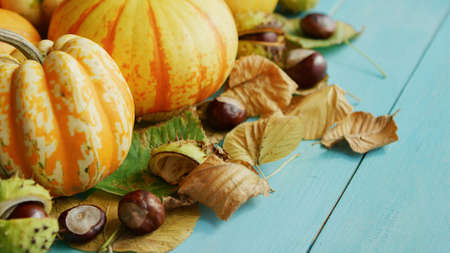 From above view of orange pumpkins laid together with chestnuts and dry leaves on blue wooden background