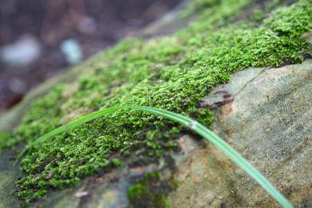 veiw: Moss. Close up veiw. In the park