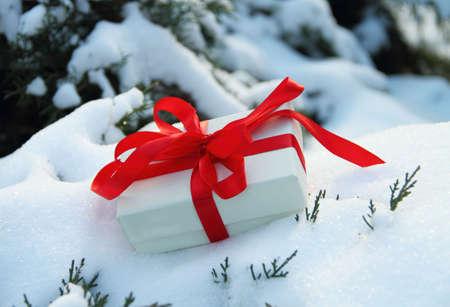 Winter present box on the thuja tree Stock Photo - 6257473