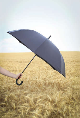 Hand of the man holds umbrella in the wheat field photo