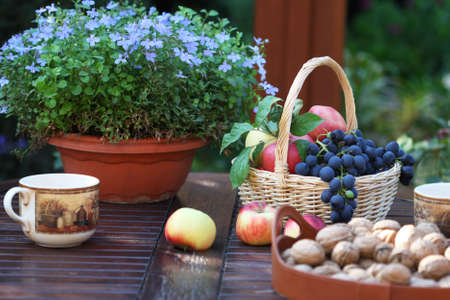 Table in the garden is served for tea photo