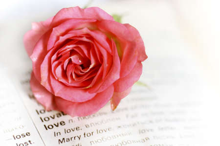 Vintage romantic page with one pink rose  Stock Photo - 9224292