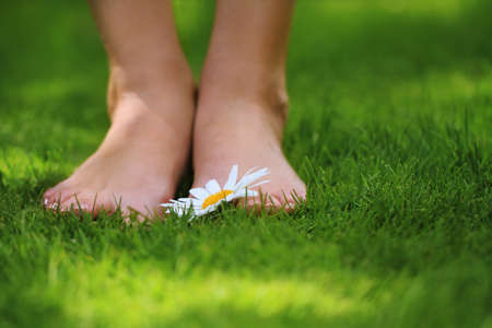 Woman legs with a daisy on the green grass photo