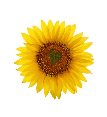 Sunflower with heart in center isolated over white background Stock Photo - 10114784