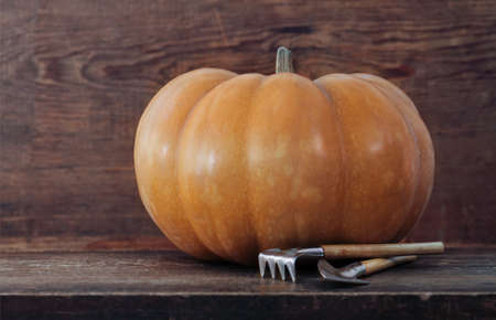 thankful: Pumpkin with garden tools on the wooden background