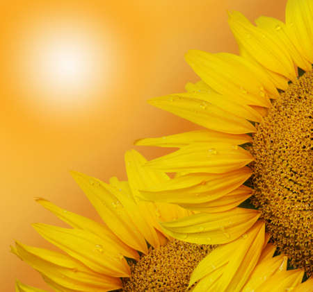 Two sunflower on the sunny sky background  photo