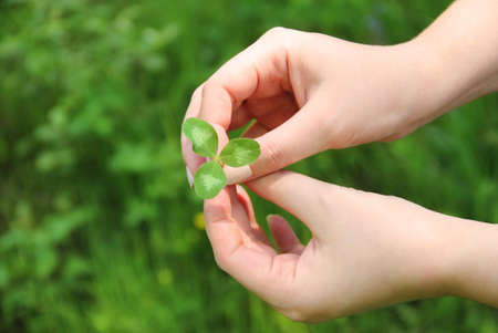 Clover in female hand in sunny spring day Stock Photo - 12285212