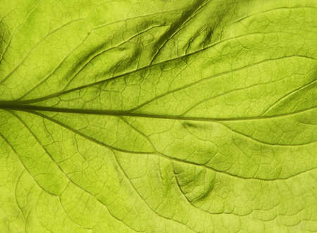 Green leaf close up texture. Abstract spring background photo