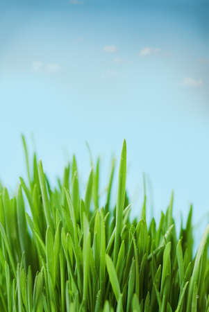 Fresh spring bokeh abstract background. Green grass over blue sky photo