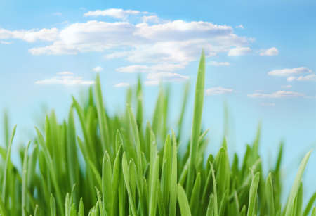 Fresh spring bokeh abstract background. Green grass over blue sky Stock Photo - 12636669