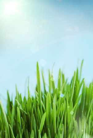 Fresh spring bokeh abstract background. Green grass over blue sky Stock Photo - 12636667