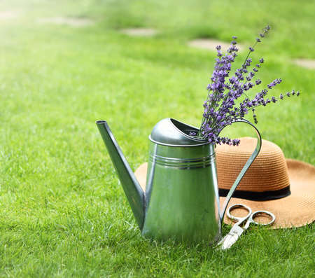 herbs of provence: Lavender in watering can, hat and scissors in the summer garden Stock Photo