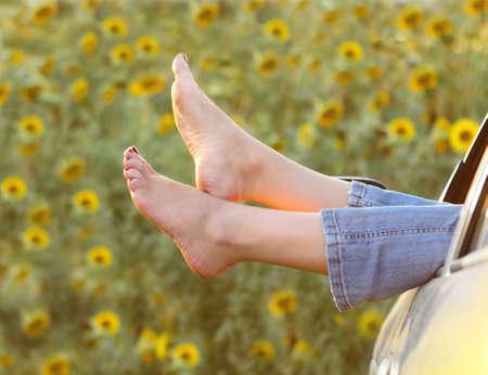 pies sexis: Piernas de la mujer fuera de las ventanas de coche por encima del campo de girasoles Foto de archivo