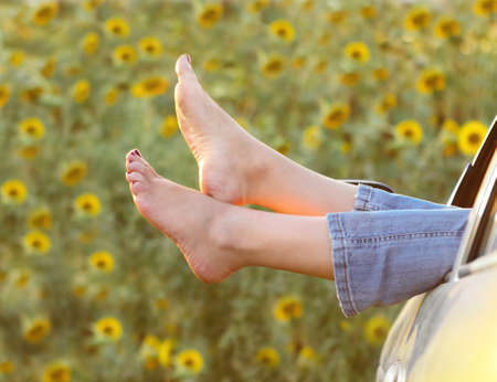 Woman legs out the windows in car above the sunflowers field photo