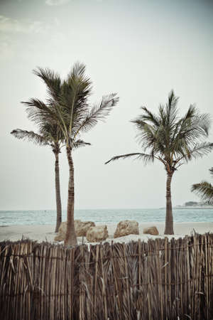 three palm trees: Three tropical palm trees against the background of a blue sky and ocean beach sea waters