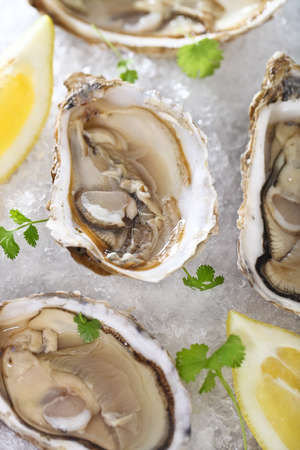Fresh oysters platter served in ice with lemons photo