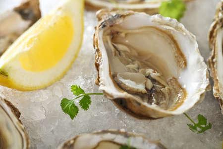 ostra: Ostras frescas plato servido en el hielo con limón