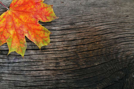 Autumn wooden background with maple leaves  photo