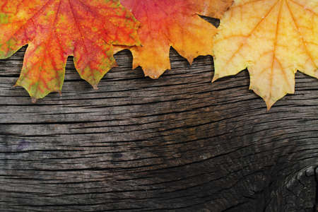 autumn grunge: Autumn wooden background with maple leaves  Stock Photo