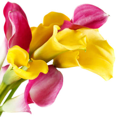 flawless: Bunch of yellow and pink cala lilies isolated on white Stock Photo