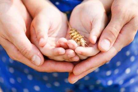 Hands of a mother and her little daughter holding wheat. Concept photo