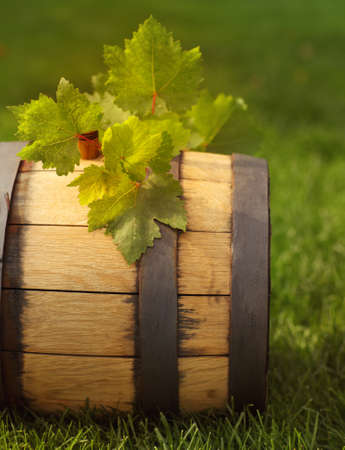 Green leaves of the grape on the wine barrel. Close up photo