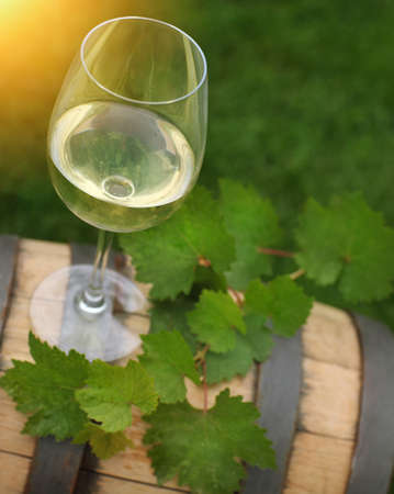 One glass of white wine and green leaves of the grape on the wine barrel. Close up photo