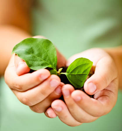 sprout growth: Children`s hands holding young plant against spring green background. Ecology concept Stock Photo