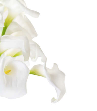 arum: Bunch of Cala Lilies in high key isolated on white Stock Photo