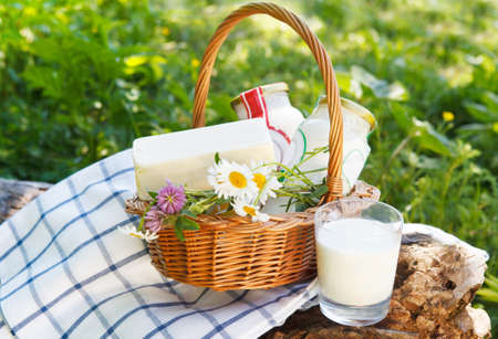 emmental: Different milk products: cheese, cream, milk, oil. On a nature background Stock Photo