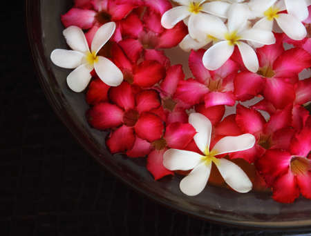 Bowl of water with pink and white flowers. Close up. Spa concept Stock Photo