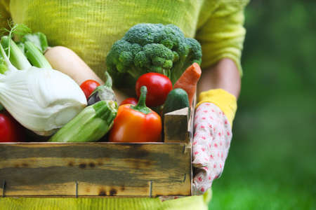 vegetable basket: Woman wearing gloves with fresh vegetables in the box in her hands. Close up Stock Photo