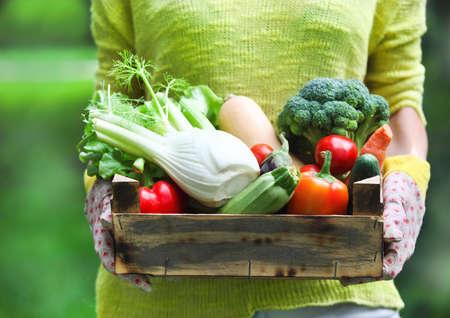 canasta de frutas: La mujer llevaba guantes con verduras frescas en la caja en sus manos. Close up