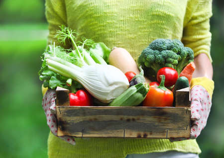 fruits basket: Woman wearing gloves with fresh vegetables in the box in her hands. Close up Stock Photo