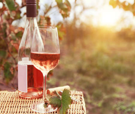 One glass and bottle of the rose wine in autumn vineyard. Harvest time