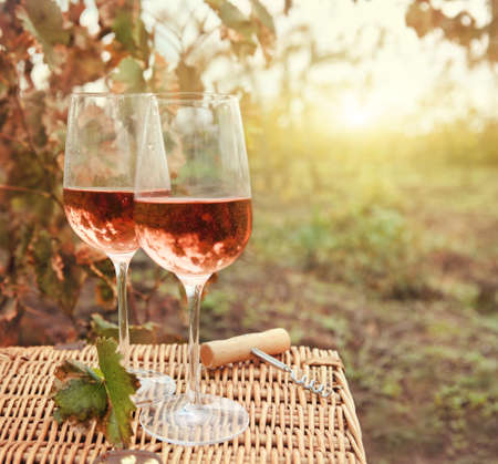 wine grape: Two glasses of the rose wine in autumn vineyard. Harvest time Stock Photo