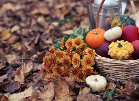 fruit and veg: Autumn still life with different shaped and colored pumpkins