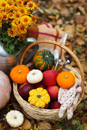 cucurbit: Autumn still life with different shaped and colored pumpkins