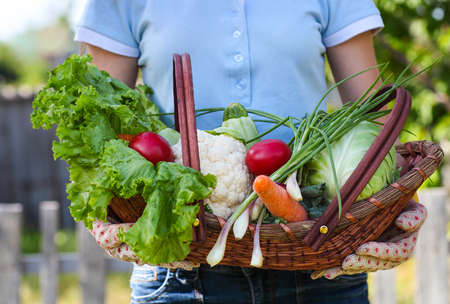 hand basket: Woman wearing gloves with fresh vegetables in the box in her hands. Close up Stock Photo