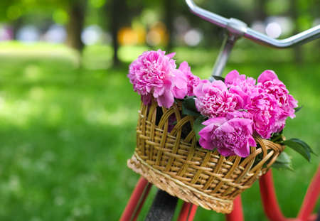 basket: Vintage bicycle with basket with peony flowers in the spring park